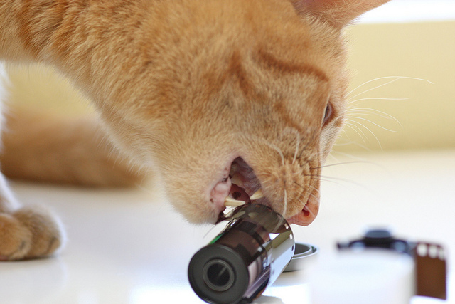 Cat against analog photography